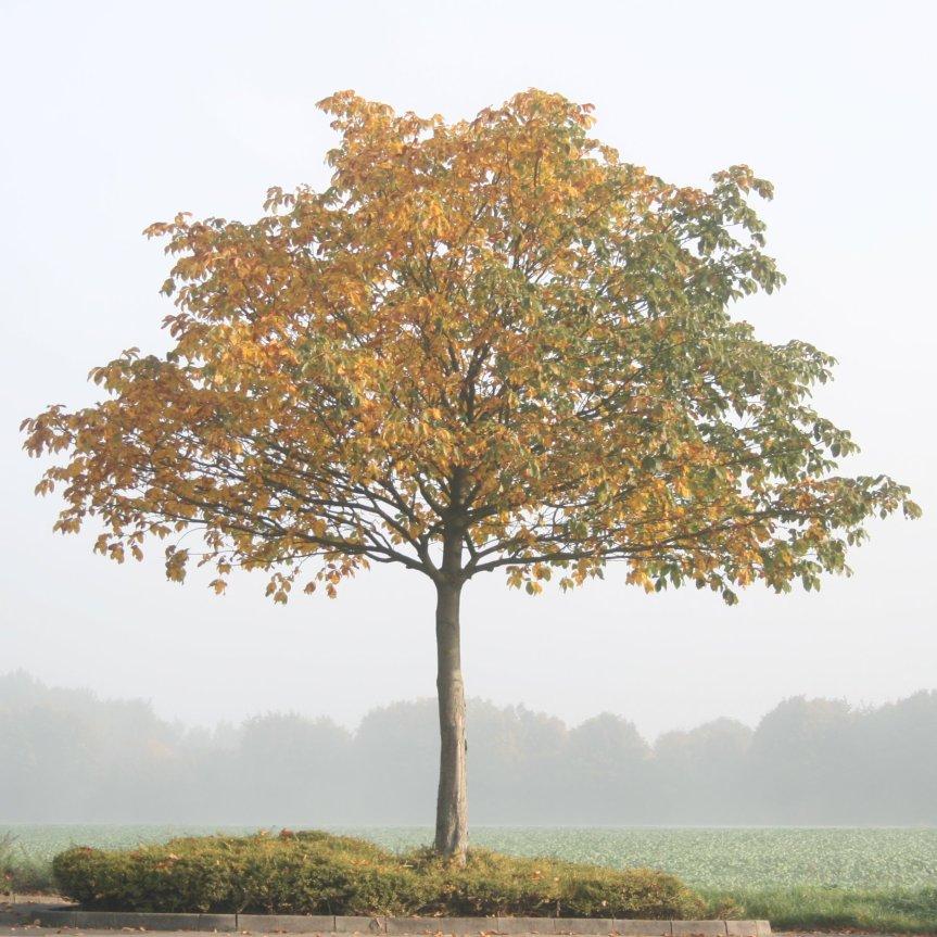 img_4040-tree-in-seasons_5135156703_o