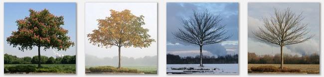 Jahreszeiten ….
