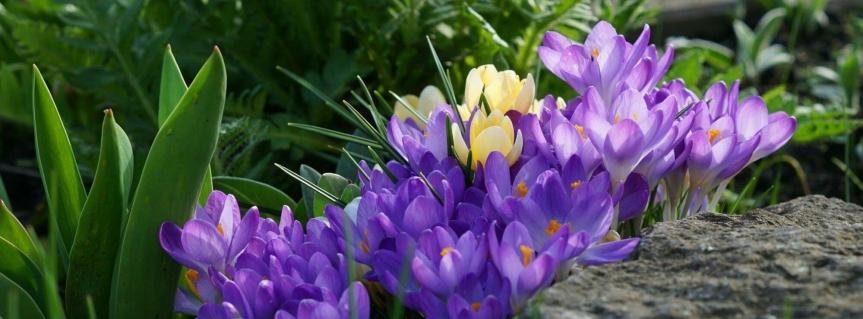 Frühling ….