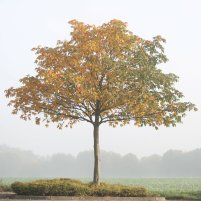img_4040-tree-in-seasons_5135156703_o