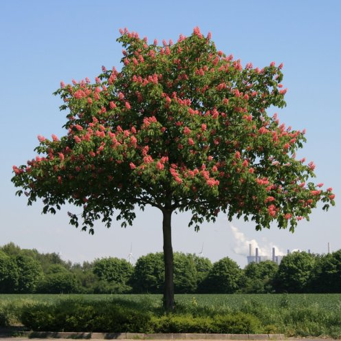 img_8076-tree-in-seasons_5135735262_o