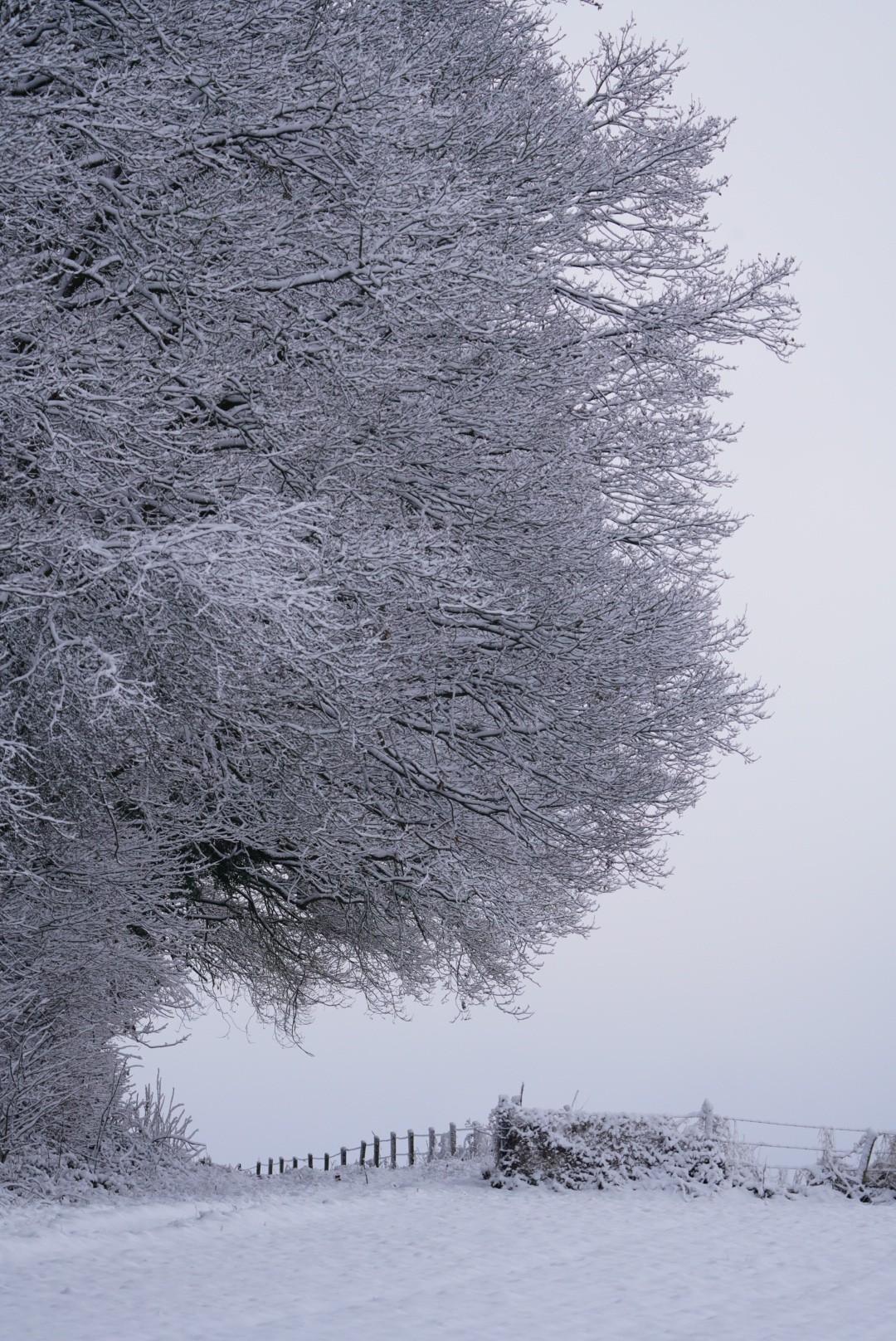 Winterlandschaft in derEifel